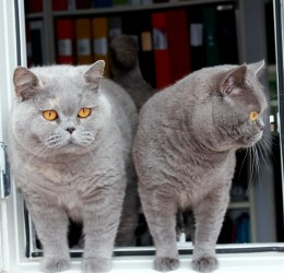 Föreläsningar och utbildningar om katt