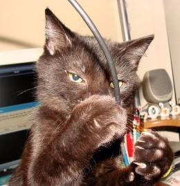 Kattproblem - äter på sladdar