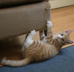 Kattproblem - klöser på möbler