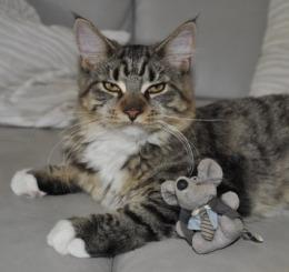 Kattproblem - ta in möss